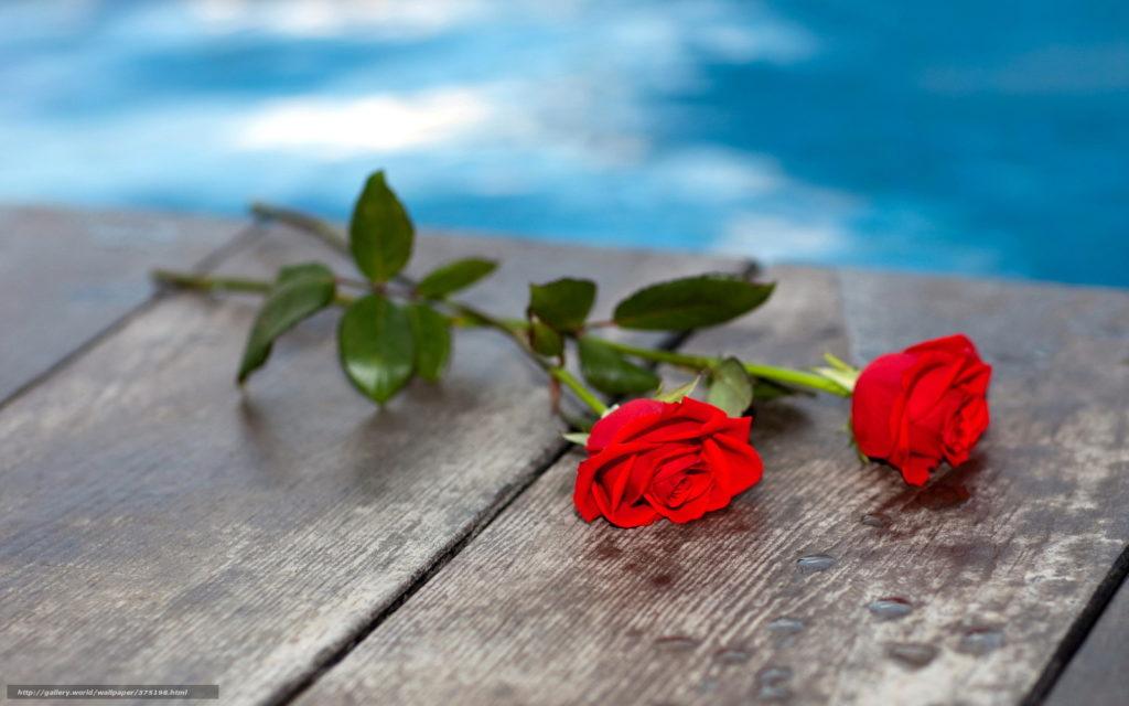 Почему-нельзя-дарить-четное-количество-цветов-живому-человеку