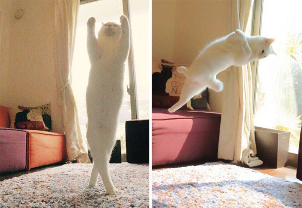 Почему-говорят-что-у-кошки-9-жизней