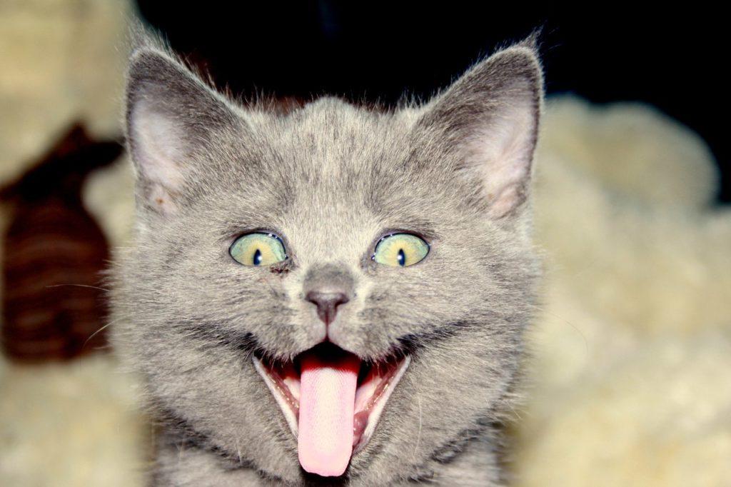 Почему-кошки-любят-валерьянку