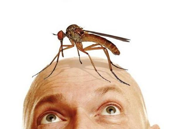 pochemy-pishit-komar