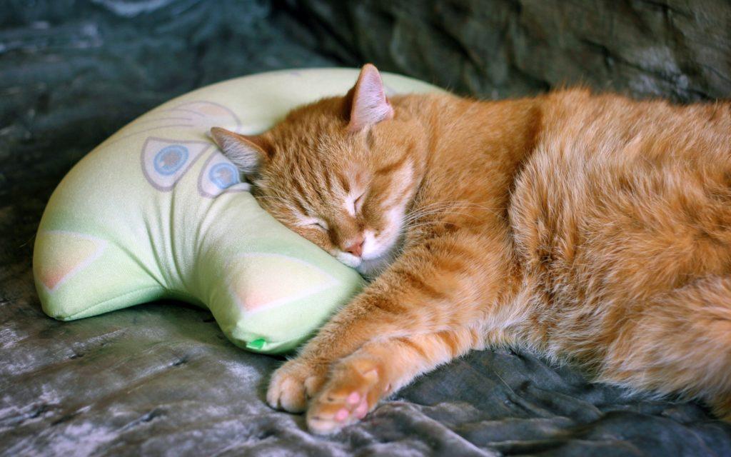 Почему-кошки-много-спят